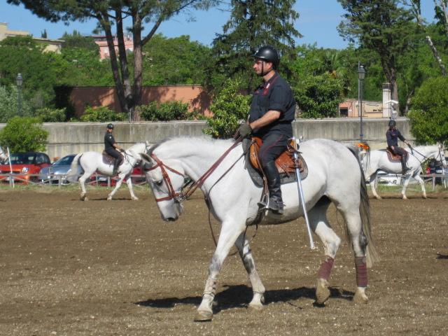 """Equitazione: a Piazza di Siena torna a correre """"Championesse d'Or"""", salvata da un unguento dell'ENEA"""