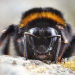 ENEA, da 'alleanza' uomini-insetti benefici per agricoltura e salute