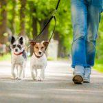 Vita da cani. Piu' dog sitter che insegnanti, il mercato del lavoro nel futuro Usa