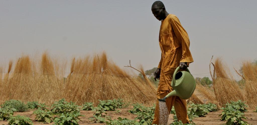 IFAD, nuovo impegno degli Stati membri per ridurre fame e povertà di milioni di abitanti delle zone rurali