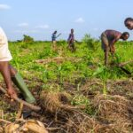 IFAD: Nuovi fondi per lo sviluppo agricolo contro il moltiplicarsi dei conflitti armati